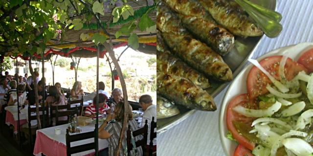 collage sardine